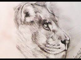how to draw a lion using pencil yzarts yzarts youtube