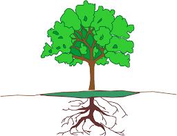 preschool plants lesson plan learn trees