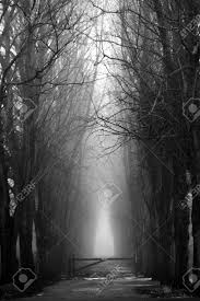 scary spooky forest in black and white for halloween can be