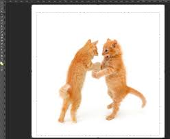 How To Make A Funny Meme - photoshop basics how to make a really funny cat meme bigstock blog
