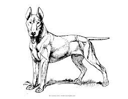 realistic dog coloring page free download