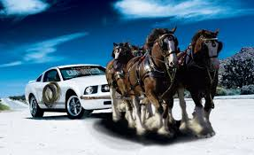 ferrari horse vs mustang horse ford mustang mustang edition feature features car and driver