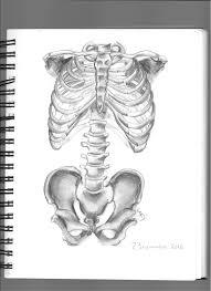 draw drawing anatomy bones skeleton sketch art pen pencil easy