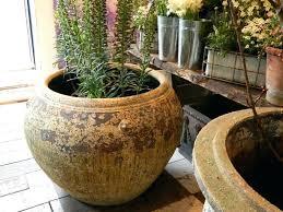 large container planting ideas big plants pots ornamental
