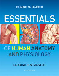 Anatomy And Physiology Pdf Books Marieb Essentials Of Human Anatomy U0026 Physiology Laboratory Manual