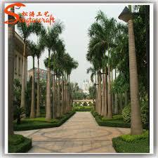 18ft palm tree plants royal palm tree looking