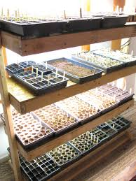 adventures in eco living seed starting basics