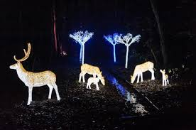 enchanted forest christmas lights enchanted forest picture of stockeld park spofforth tripadvisor