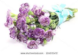 purple carnations bouquet purple carnations flower on white stock photo 104572472