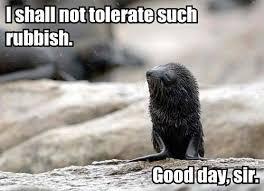 Baby Seal Meme - funny seal meme by lolgirl memedroid