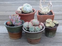 cute succulent pots simple easy succulent containers tended