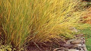 top 10 plants for seaside gardens coastal living