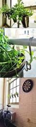 14 best low light plants for an apt dweller like me images on