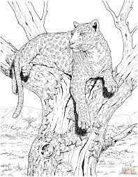 draw leopard tree