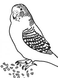 6 best images of printable coloring pictures of parakeets budgie