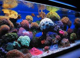 reef tank lighting schedule nano reef tank 5 things you need to know aquariumstoredepot