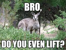 Kangaroo Meme - funny kangaroo meme bro do you even lift picture