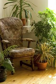 home plants general houseplant care articles gardening know how