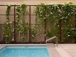 wall trellis design 21 best plants for your wall images on pinterest plants