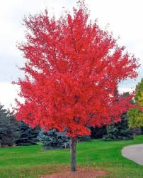 different types of trees 4 types of trees on long island tree removal long island