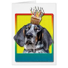 bluetick coonhound with cats birthday cupcake bluetick coonhound chuck card zazzle com