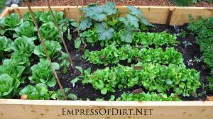 growing vegetables in the front yard empress of dirt