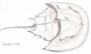 the horseshoe crab