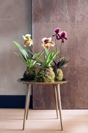orchid kokedamas an elegant twist on 2017 u0027s indoor gardening trend