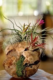 indoor plant arrangements 390 best indoor plants arrangements images on pinterest