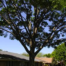 tree trimming houston experts in tree trimming in houston tx
