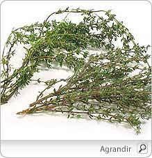 thym serpolet cuisine thym propriétés arômes bienfaits effets secondaires recettes