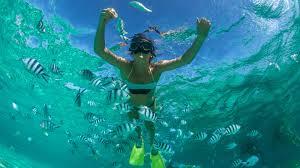 indian ocean natural world u0026 wildlife natural world safaris
