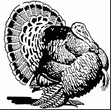 amazing real turkey coloring pages with turkey coloring page