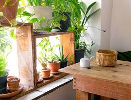 5 indoor plants that are nearly impossible to kill sporteluxe usa