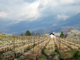 Conservation Vin Rouge Vin Des Allobroges U2014 Wikipédia