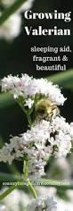 Wohnzimmerm El Im Englischen Stil Die Besten 25 Englische Land Garten Ideen Auf Pinterest