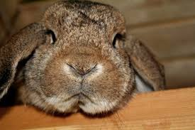 rabbit bunny the 17 most important bunny facts of all time save animals