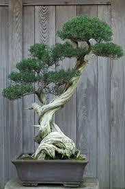 pot bonsai design best 20 juniper bonsai ideas on pinterest bonsai forest bonsai