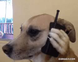 Dog Phone Meme - dog on phone gifs get the best gif on giphy