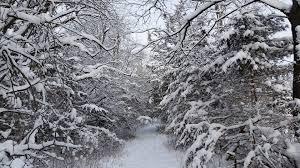 carole u0027s christmas tree farm christmas trees for sale birch
