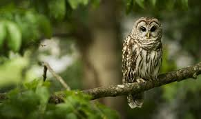 an owl sits on a tree branch hd wallpaper