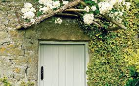 thorny problems what is a good climbing plant to cover a wall