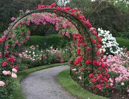 Metal Arches And Pergolas by Rose Garden With Borders And Metal Pergola Stunning Rose Garden