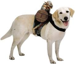 costumes pet costumes in all sizes costumes for