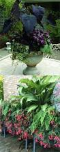 best 25 shade garden ideas on pinterest shade plants shade 16 colorful shade garden pots and plant lists