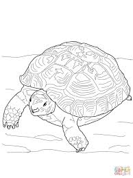 russian tortoise coloring page free printable coloring pages