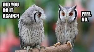 Funny Owl Meme - funny owl memes pictures loldamn com