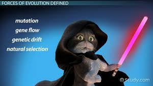 the four forces of evolution video u0026 lesson transcript study com