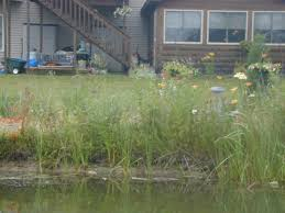 native plants illinois native plant buffer riparian buffer lake county il
