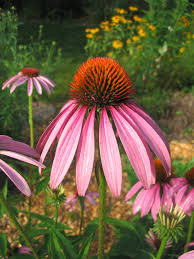 benefits of native plants buy native grow native indiana